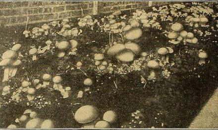 Mushrooms no longer!