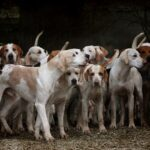 THE LOST HOUNDS  – PART ONE