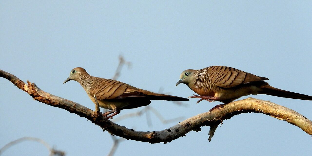 Just who is cuckoo? – part 1