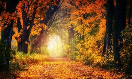 Autumn in the Wold – part 1