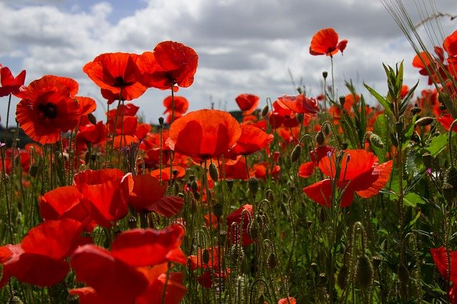 YOUR DAILY BETRAYAL – Wednesday 11th November 2020 – Armistice Day – 21 Days to the End of Lockdown