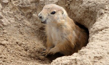 YOUR DAILY BETRAYAL – Thursday 25th March 2021 – Another Covid Groundhog Day