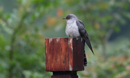 A GRUMPY OLD WOMAN WRITES: A cuckoo in the nest – and all the little birds have fled