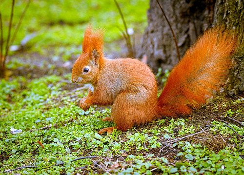 """YOUR DAILY BETRAYAL – Tuesday 21st September 2021 – """"Green"""" Squirrels!"""