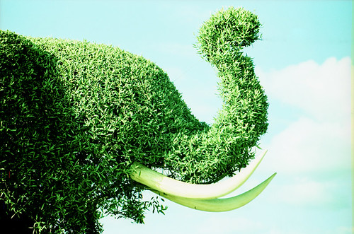 YOUR DAILY BETRAYAL – Monday 20th September 2021 – Pay up to save the Green Elephant